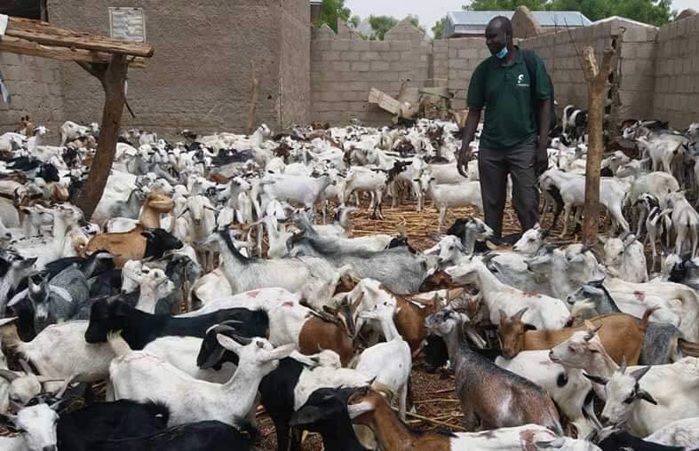 Distribution officielle des chèvres et des moutons: Près de 5000 familles et 4500 femmes bénéficiaires