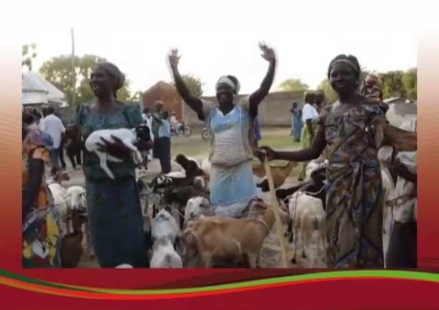 PRODEL: Opération de distribution de chèvres et moutons à près de 900 Familles et Femmes